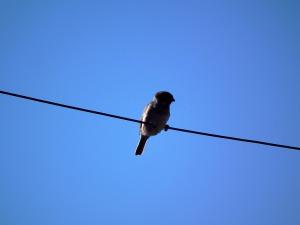 bird-201289